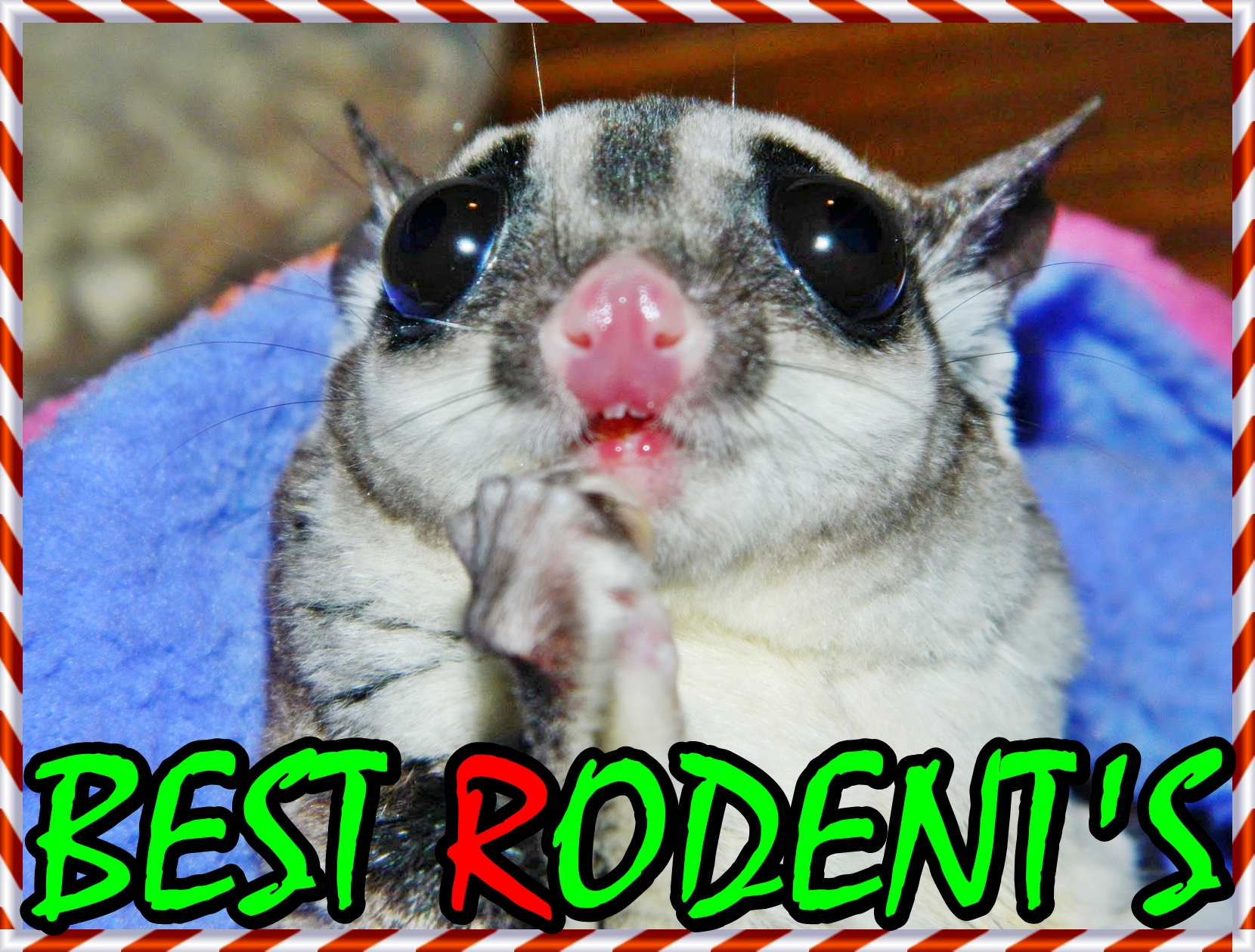 BEST RODENTS