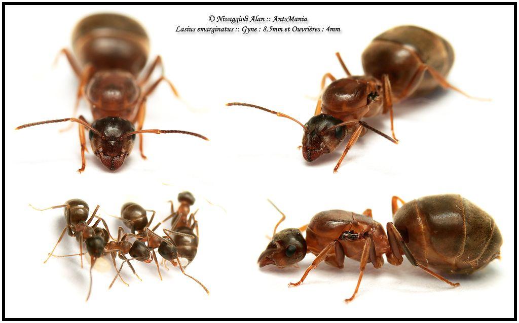 Karınca dünyası