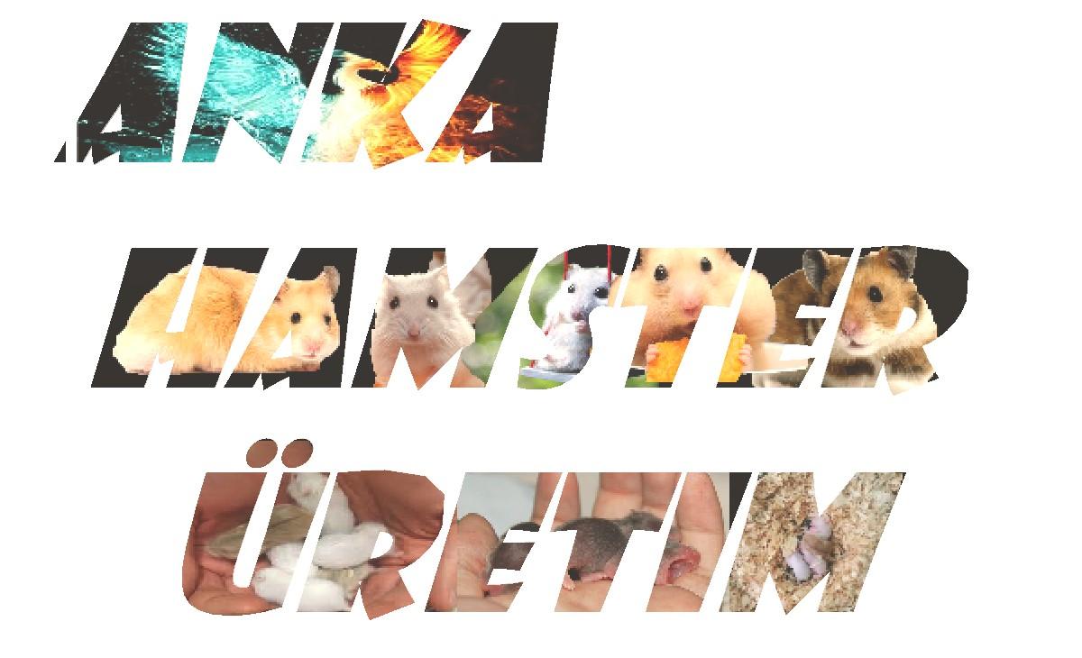 Anka Hamster Üretim