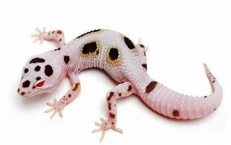 JK Reptiles